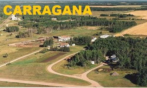 Carragana